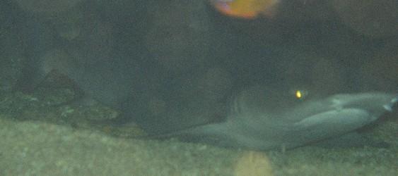 ... bra filmer med hajar upp till 3 meter e1fd725c88b2d