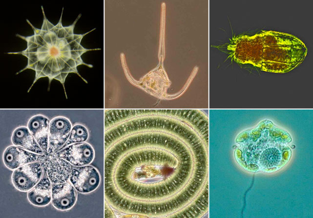 Av mikroorganismer har upptäckts i havet utanför peru och chile